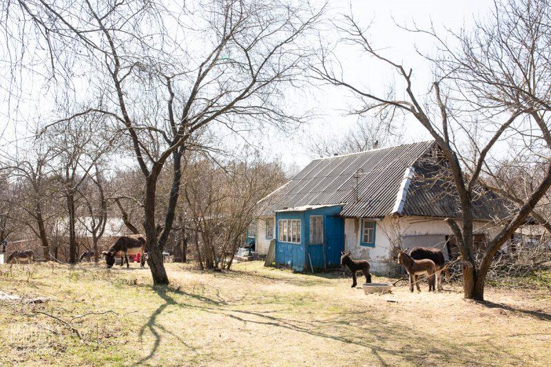 Ослиная ферма под Киевом Osloff